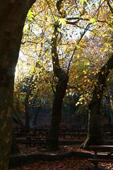 Troodos Geopark (34) (Polis Poliviou) Tags: polispoliviou polis poliviou   cyprus cyprustheallyearroundisland cyprusinyourheart yearroundisland zypern republicofcyprus  cipro  chypre   chipir chipre  kipras ciprus cypr  cypern kypr  sayprus kypros polispoliviou2016 troodosgeopark troodos mediterranean nicosia valley life nature forest historical park trekking hiking winter walking pine pines prodromos limassol paphos fall autumn geopark kakopetria