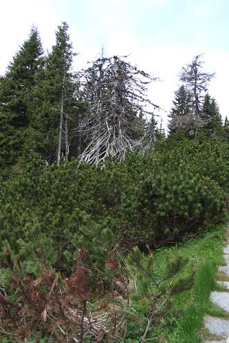 Dead trees, 28.05.2009.
