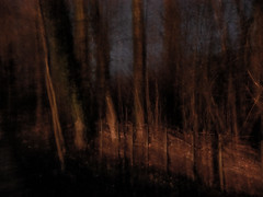 evening walk I (szllva) Tags: le arbor forest icm intentionalcameramovement rougecloitre