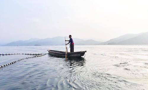 👀巨网捕鱼🐟 有特色,一网打尽竟然有惊人的十万公斤🐟,鱼头好大!京畿省级老板也来看过,啊.....等我视频,鱼汤棒..  Fishing   #phonegraphy #phoneonly #onlyphone #千岛湖 #travel #fishing #dailyphoto