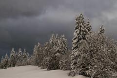 Jour de neige (snowy day) (Larch) Tags: montagne mountain alpes alps hautesavoie neige snow snowy arbre tree ciel sky cloud nuage brouillard fog blanc white gris grey novembre november agy plateaudagy france inexplore