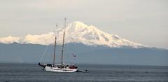 Mount Baker, WA, USA (kitmasterbloke) Tags: mountbaker cascades washington usa mountain volcano snow peak sea schooner boat canada