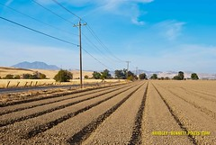 065 wind rows LR (bradleybennett) Tags: farm furrows wind rows tractor equipment ranch