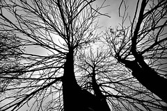 Nature's anatomy (Rupam Das) Tags: nikon nikkor d810 1024mm wideangle nature silhouette tree branch architecture outline blackandwhite monochrome outdoor minnesota minneapolis arboretum plant tangle flickr travel