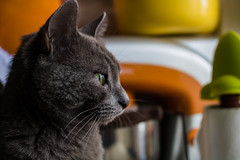Pepita (baris.lorenzo) Tags: afternoon canon contrast colours cat colors cold cats calm colorful depthoffield deep day digital eyes eos focus gatto green orange portrait 760 760d 28 28mm sharp home autumn animals animali