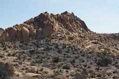 Mastodon Peak (rovingmagpie) Tags: california joshuatreenationalpark joshuatree mastodonmountainloop mastodonmountain mastodonmine desertforests df2016
