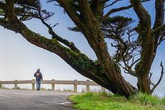 Point Reyes Seashore (runcolt12) Tags: pointreyesnationalseashore california californiacoast pacificcoasthighway pacificocean pointreyesseashore lighthouse