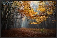 Serrhan im Herbst (NPPhotographie) Tags: nature art creative oberberg npp tree wood forest fog mist dust magic magical morning way path serrahn autumn fall