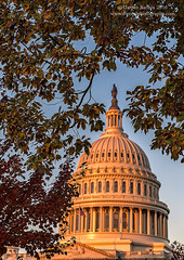 Autumn at the Capitol (Dwood Photography) Tags: autumn capitol autumnatthecapitol dwoodphotography dwoodphotographycom us uscapitol washington dc washingtondc 2016 bronze yellow fall leaves leaf red green