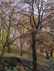 """""""Color of Autumn 2016 in NYC"""" (Central Park West Foliage Scene) (nrhodesphotos(the_eye_of_the_moment)) Tags: dsc0814172 theeyeofthemoment21gmailcom wwwflickrcomphotostheeyeofthemoment colorofautumn2016innyc autumn season plantlife leaves manhattan stems bokeh centralparkwest nyc foliage outdoor rocks trees perspective reflections silhouettes creative tree plant landscape botanicals"""