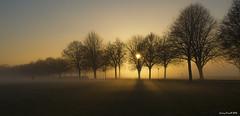 Fog on the Downs (zolaczakl ( 2.5 million views, thanks everyone)) Tags: bristol 2016 photographybyjeremyfennell nikond7100 nikonafsnikkor24120mmf4gedvrlens uk england southwest thedowns trees fog sunlight ladiesmile