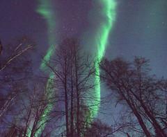 Winter Lights (Rebeak) Tags: auroraborealis alaska auroras nikon nature northpolealaska night northernlights sky stars trees green