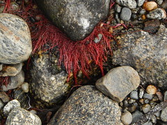 Mysterious red threads in life (Pictoscribe) Tags: white abstract rock river august falls drought co wa chelan polished leavenworth usfs pictoscribe