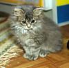 00368 (d_fust) Tags: cat kitten gato katze 猫 macska gatto fust kedi 貓 anak katt gatito kissa kätzchen gattino kucing 小貓 고양이 katje кот γάτα γατάκι แมว yavrusu 仔猫 का skorpi बिल्ली बच्चा