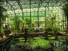 Greenhouse in Bucharest Botanical Garden (cod_gabriel) Tags: greenhouse romania botanicalgarden bucharest bucuresti sera bukarest roumanie boekarest bucarest romnia bucureti bucharestbotanicalgarden bucareste grdinbotanic grdinabotanicbucureti ser