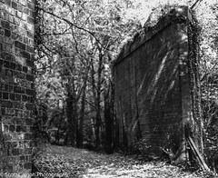 Autumnal Light (scott calnon) Tags: mamiya mediumformat countryside 120film devon 6x7 atmospheric yealm 127mm mamiyarb67s rb67spro