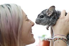 Connecting (●Cosmin Radu●) Tags: portrait pets cute animal delete2 rodent delete chinchilla