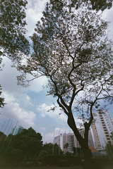 18A (calvinpurnomo) Tags: film 35mm voigtlander fujifilm toycam c41 fujifilmsuperia200 konicawaiwaiwide voigtlanderbessar3m