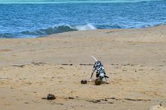 editada  (23 de 1) (monteiro.mariah) Tags: mar cachorros litoral arraialdajuda dlmata