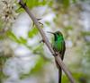 _DSC0008-1.jpg (.el Ryan.) Tags: argentina aves mendoza