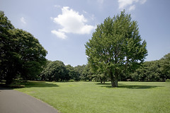 A SMALL AIRPORT, SOME PARKS AND CLOUDS - VII (Jussi Salmiakkinen (JUNJI SUDA)) Tags: park summer sky japan clouds landscape tokyo woods     chofu  nogawa