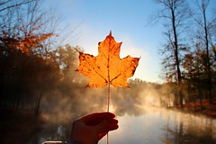 Maple Morning (Jane Inman Stormer) Tags: morning autumn trees light sun mist cold color reflection fall water yellow fog rural leaf maple pond stem woods october midwest hand outdoor country fingers indiana bluesky foliage clear retreat block veins delicate hold