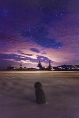 George stargazing (lizziesnowphotography) Tags: ocean camera longexposure nightphotography pink sea newzealand summer sky dog pets beach dogs night clouds canon puppy lens stars george spring friend surf waves purple space astro galaxy astrophotography poodle nz stunning planets nightsky dslr gazing aotearoa pondering coromandel whangamata galactic zoomlens stargazing summery 70d purenewzealand 18135mm canon70d