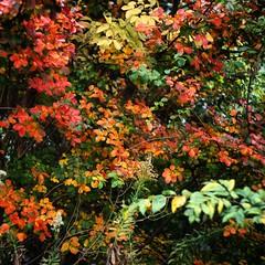 雑多な紅葉って良い。 (moja_san) Tags: