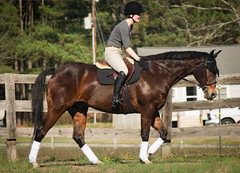 Jobs Well Done (only_natalie) Tags: horse bay artsy jumper twister bit equestrian equine equus hunterjumper gelding eventing eventer snaffle threedayeventing