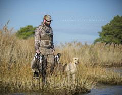 Bounty (santosh_shanmuga) Tags: cambridge dog canada golden geese duck md nikon lab call labrador shoot blind hunting maryland retriever goose easternshore shore shotgun waterfowl blackwater eastern dorchester hunt decoy hunder d3s