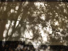 Tenuous brightness (michelle@c) Tags: street trees shadow urban wall pavement wand strasse ombre arbres foundart rue mur schatten trottoir urbain bürgersteig baume städtisch parisxiv michellecourteau tenuousbrightness clartéténue dünnehelle