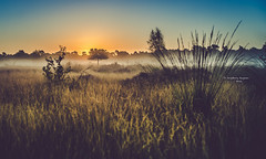 Sunrise with frosting (Ingeborg Ruyken) Tags: 2016 500pxs drunenseduinen loonseendrunenseduinen dawn dropbox flickr heath heide morning natuurfotografie ochtend september summer zomer zonsopkomst