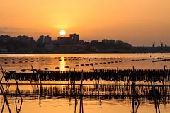 Anima e cozze (Antonio Ciriello PhotoEos) Tags: cozze mussels mare sea sun sole sunset tramonto seascape landscape paesaggio marino taranto puglia apulia italia italy canoneos600d canon eos600d 600d rebelt3i tamron 70300vcusd 70300vc 70300 tamron70300vc
