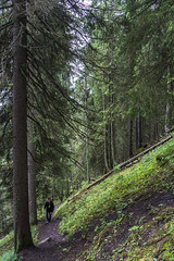 Hiking - Vystup na Poludnicu (Miroslava Balazova LAZAROVA) Tags: forest nature landscape beauty slovakia janska dolina hiking trees mountain