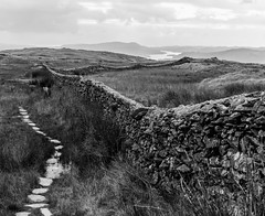 Wansfell to Windermere (Cirrusgazer) Tags: cumbria england lakedistrict lakewindermere wansfellpike blackandwhite cloud drystonewall fells monochrome path steppingstones sunlight wet