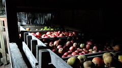 Apple Store, Attingham Park, Shropshire (Chris Glover - Computer Problems (It's Broke!)) Tags: attingham park attinghampark national trust nt nationaltrust shropshire shrewsbury atcham apple apples store applestore box boxes red rosy green inside