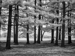 PB020446 - Distant Memories (Syed HJ) Tags: olympusomdem5 olympusem5 olympus em5 fujian35mmf16 fujian35mm fujian 35mm cctvlens blackandwhite blackwhite bw infrared ir 720nm trees tree nashua nashuanh