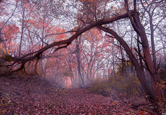 Fall (patkelley3) Tags: cold fall autumn fog tree