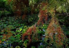 autunno orto botanico (akabolla) Tags: ortobotanico lucca autunno toscana