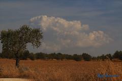 (Leyre Lucas) Tags: olivo cert campo paisaje cielo airelibre