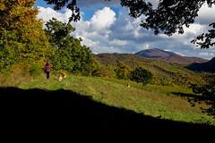 Alpe della Luna (Franco Vannini) Tags: madonnadelfaggio tuscany toscana beech oak faggio quercia autunno goldenretrievers