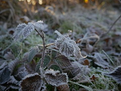 Frosty frost (Yoeri Leeflang) Tags: leaves sunset sun rays autumn fall golden hour woods hills