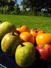 starr-161113-5867-Diospyros_kaki-local_fall_fruit-Hawea_Pl_Olinda-Maui (Starr Environmental) Tags: diospyroskaki