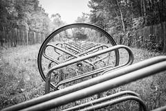 Left behind (Jan Moons) Tags: wheel bike bycicle schwalbe lugano blackandwhite monochrome nikon nikond600 d600 2880mm 80mm fietswiel fietsenstalling rotselaar meer plas