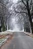 Winter! [Explore 16,11,2016] (I Love Canon <3) Tags: winter trees alley snow cold road canoneos50d ef24105f4lisusm lightroom wielkopolska poland polska rokosowo