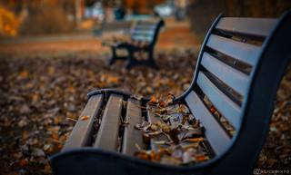 Lonesome Autumn (explored)