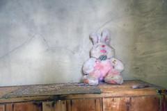 Gloomy Gallery (milfodd) Tags: october 2016 singlerawhdr abandoned explore stuffedtoy