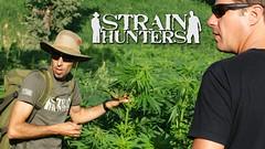 Strain Hunters Cannabis Revolution (kmobocunib1970) Tags: amsterdam arjan cannabis colombia documentary franco greenhouse india jamaica kingsof marijuana seeds strain strainhunters vice