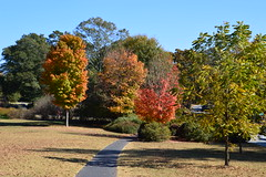 ATL autumn 114 (Krasivaya Liza) Tags: fall autumn atl atlanta ga georgia leaves trees parks nature park city urban cityscape theatl beltline november 2016