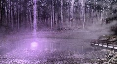 The day the lights arrived (sven_breitkopf) Tags: pancake 22mm canon eos m3 mirrorless apsc fantasy magic girl light surreal digital art modified manipulation lake forest woods trees dark scary mystic